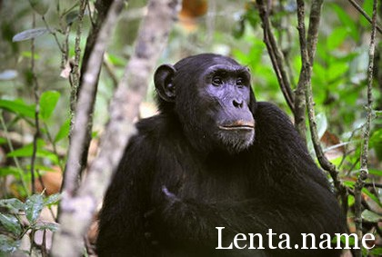 Открыты источники эволюционных различий между видами