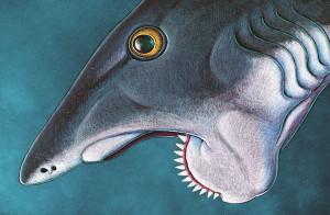 Так выглядел необычный рот геликоприона