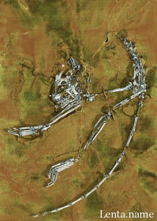 Исследователи представили древнейший из известных скелетов приматов