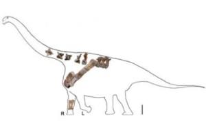 Окаменелости из Китая помогли ученым описать нового титанозавра