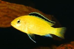 Рыбы могут вспомнить, где их кормили через 12 дней