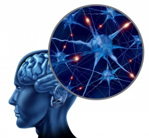 При создании искусственного интеллекта ученые хотят применить модульную структуру мозга животных