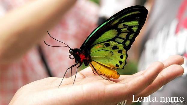 BBC показала коллекцию самых редких животных и насекомых