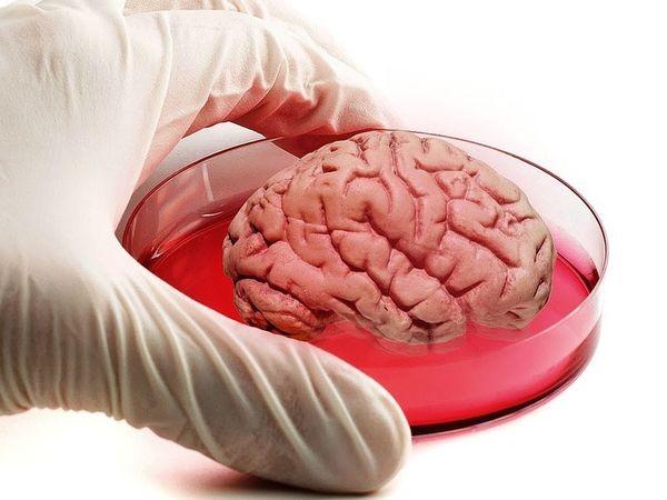 Ученые идентифицировали в мозге механизм быстрого пробуждения от сна и наркоза