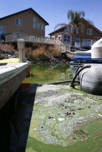 Зеленые воды Калифорнийских заливов