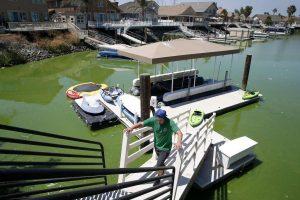 Водоросли атакуют Калифорнийский залив