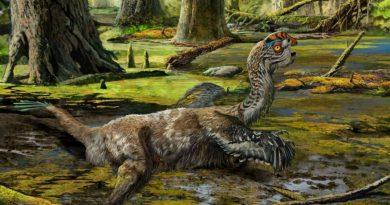 Его чуть не взорвали! В Китае откопали неизвестный ранее вид динозавров