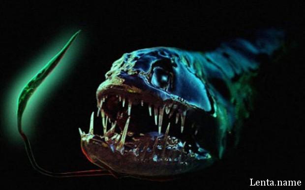 Подземные океаны полны «Чужих», считает эксперт