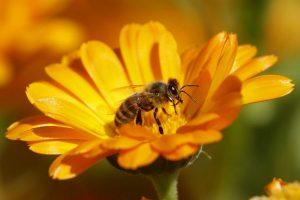 Исследователи научили пчел играть в гольф?