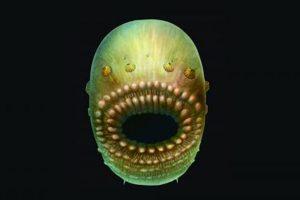 Этот морщинистый мешок может быть ранним известным предком человека