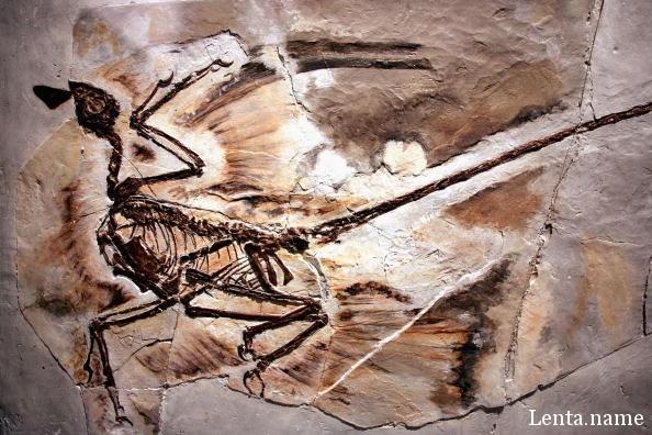 Лазерная технология показывает, как Динозавры выглядели на самом деле