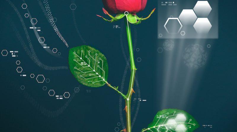 Ученые создали Розу – киборга, способную хранить энергию
