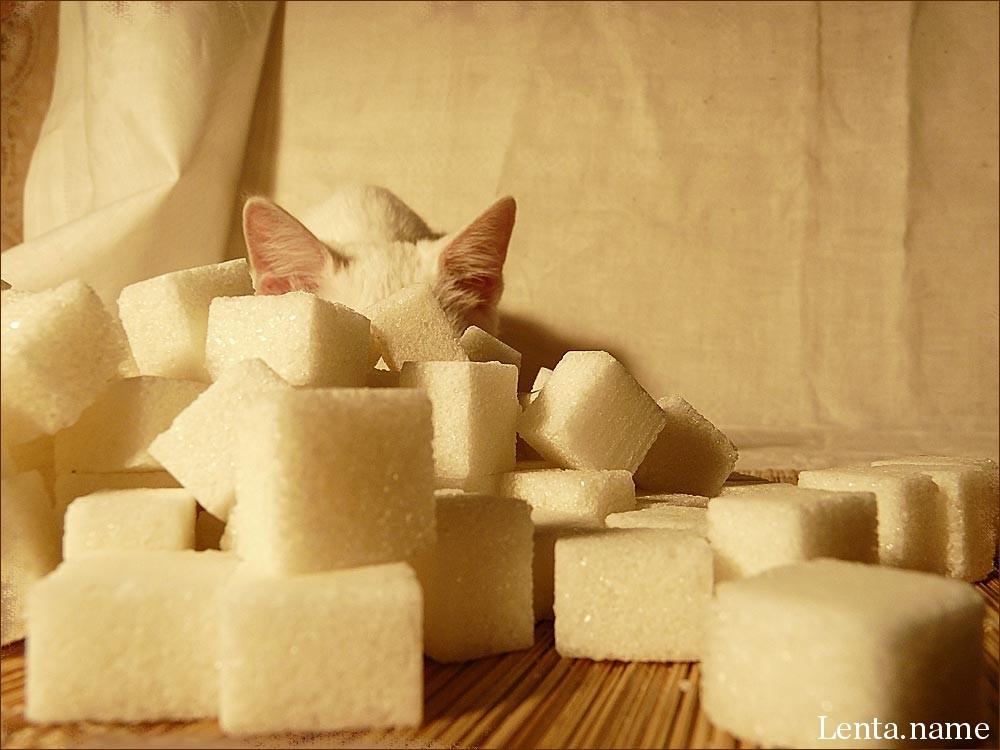 Кошки равнодушны к сладостям из-за псевдогена