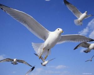 День мигрирующих птиц в заповеднике Утриш