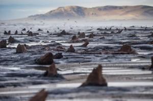 Мощные штормы откопали древний лес в Уэльсе