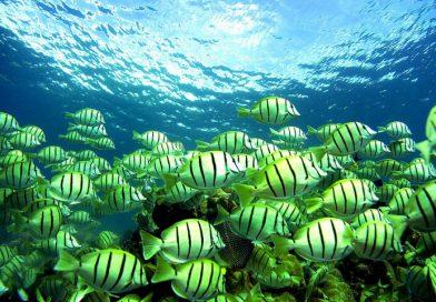 Рыбы могут петь как птицы, даже лучше – хором!