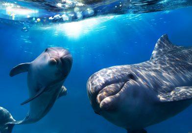 Как дельфины охотятся но осьминогов