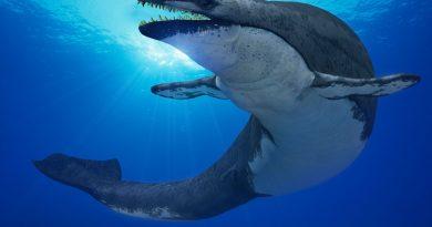 Своенравный кит, проплывший 400 км вверх по реке до Монреаля, найден мертвым