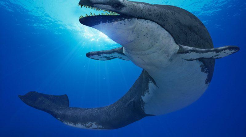Этот древний кит всасывал добычу, как гигантский пылесос