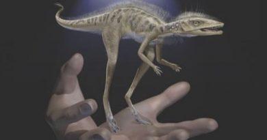 Причудливый динозавр  по имени «Капитан Крюк»